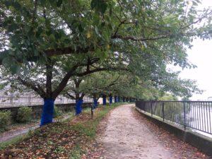 秋の綾瀬川沿い